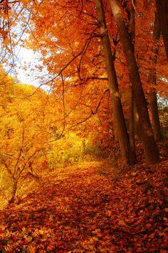 photography pretty cold beautiful fall nature colorful colourful autumn seasons vertical autumn blog fall blog