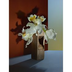 """Editorial, """"Orchids""""."""