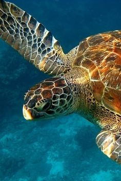 Green Turtle by Compact Camera by Matcenbox on 500px