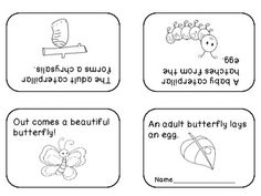 Butterfly Life Cycle Freebie - mini book and cycle wheel Kindergarten Themes, Kindergarten Science, Teaching Science, Science Education, 1st Grade Science, Primary Science, Spring Words, Butterfly Life Cycle, Teacher Notebook