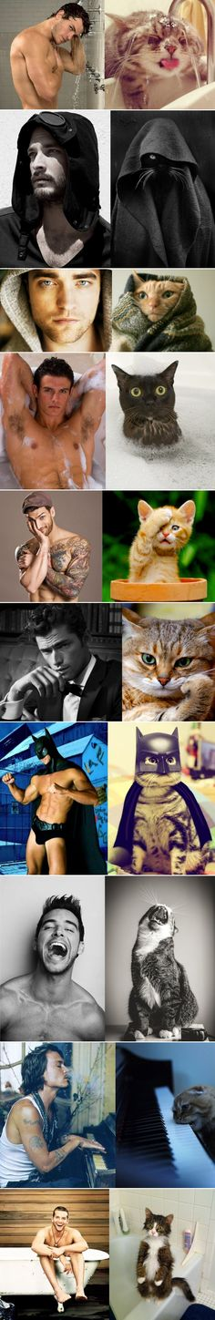Cats that look like male models. The batman and the piano one kill me!