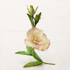 how to make gum paste lisianthus  with a gum paste recipe