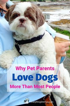 Do you love dogs more than people?  You're not alone.  Many dog lovers prefer the company of their dogs. Find out some of the reasons why we love dogs. Visit us here #doglovers #everythingshihtzu #whywelovedogs #lovedogs Small Mixed Breed Dogs, Cutest Small Dog Breeds, Best Small Dogs, Cute Small Dogs, Dog Quotes Funny, Funny Dogs, Shih Tzu Poodle, Pekinese, Dog Sounds