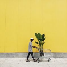 yellow, plant, and aesthetic image Street Photography, Art Photography, Photography Backdrops, Grand Art, Yellow Submarine, Happy Colors, Mellow Yellow, Belle Photo, My Favorite Color