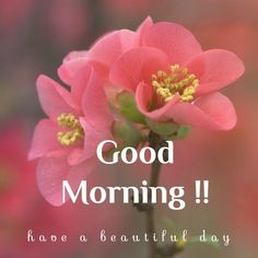[Good morning love] Latest good morning images for love ~ Good morning inages Good Morning Friday Pictures, Cute Good Morning Images, Latest Good Morning Images, Good Morning Image Quotes, Good Morning Images Flowers, Good Morning Picture, Good Morning Good Night, Morning Pics, Beautiful Morning