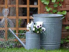 chicken wire cloche and galvanized buckets!