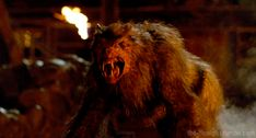 ginger snaps back Ginger Snaps Movie, Katharine Isabelle, Skin Walker, The Frankenstein, Supernatural Fan Art, Vampires And Werewolves, Frankenstein's Monster, Legendary Creature, Creatures Of The Night