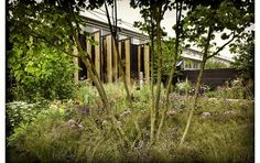 Wilson McWilliam Studio - Cloudy Bay Chelsea Garden 2014 photograph by Paul Childs