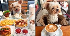 Starving Homeless Dog Gets Rescued And Taken To Pet-Friendly Restaurants Every Day https://plus.google.com/+KevinGreenFixedOpsGenius/posts/3TWZfxYmnQ1
