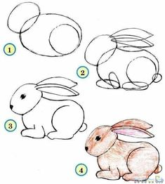 Drawing Simple Animal Rabbit pics