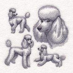 Machine Embroidery Designs at Embroidery Library! Tiffany Kunst, Poodle Drawing, French Poodles, Standard Poodles, Simple Christmas Cards, Dog Crafts, Machine Embroidery Patterns, Dog Art, Drawing Reference