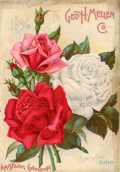 """note the lettering for the year """"1896""""  Early American Gardens: Seed and Plant Catalogs - from the Smithsonian"""