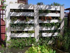 Pallet vertical garden  #Garden, #Pallets, #Urban, #Vertical