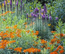 Blazing Star and Butterfly Weed