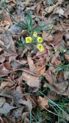 Yelloe flower