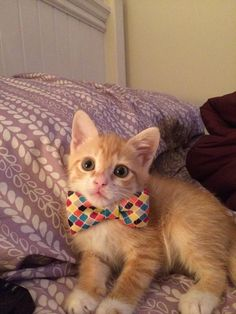 bow ties are the best. via @EmrgencyKittens