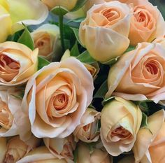 Julianne Garden Spray Roses: all year $$$ Sycamore Farms, Sunset Palette, Peach Flowers, Spray Roses, Autumn Wedding, Floral Design, Bride, Garden, Instagram Posts