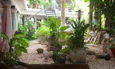 The garden at ARTapART hostel Hostel, Garden, Plants, Garten, Lawn And Garden, Flora, Gardening, Outdoor, Plant