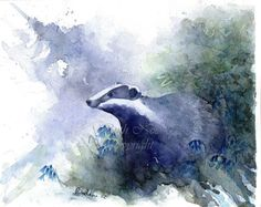BADGER mounted watercolour print by Ruth by nolanwatercolours