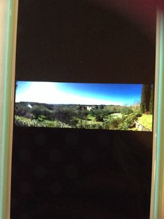 I have a beautiful view of a vineyard!!!!