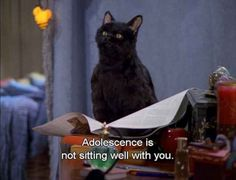 The 40 Greatest Things Ever Said By Salem The Cat – Kinder Funny Quotes For Kids, Funny Quotes About Life, Cat Memes, Funny Memes, Hilarious, Funny Videos, Salem Cat, Salem Saberhagen, Teenager Quotes