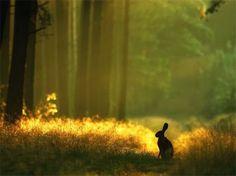 Shhhh...bunny crossing