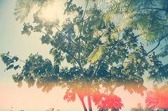 Morning joy. #sun #brasilia #tree