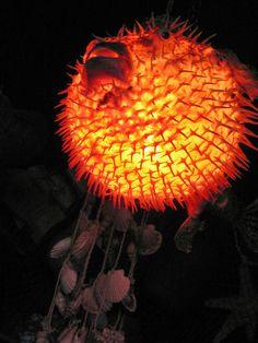 Luminescent pufferfish