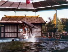 Fins and Flipper at Worlds of Fun Roller Coaster, Worlds Of Fun, Back In The Day, Kansas City, Good Times, Places Ive Been, The Good Place, Memories, Amusement Parks