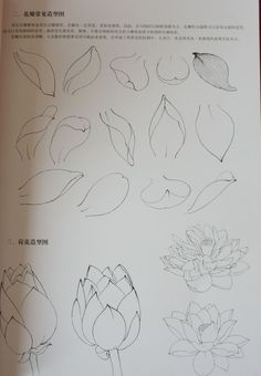 Flower Art Drawing, Flower Drawing Tutorials, Flower Line Drawings, Leaf Drawing, Flower Sketches, Floral Drawing, Art Tutorials, Art Sketches, Painting & Drawing