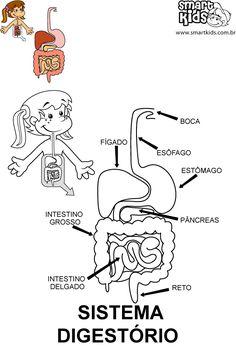 Colorir Desenho Sistema Digestório