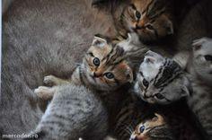 Bundle of kittens.