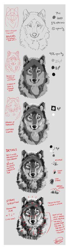 Wolf Portrait Mini-Tutorial by Junryou-na-Kokoro.deviantart.com on @deviantART
