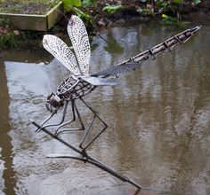 Stainless steel Garden Or Yard / Outside and Outdoor sculpture by artist David Freedman titled: 'stainless Steel Dragonfly (Large Outsize Perched on Reed statue)'