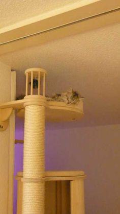 kratzbaum_catwalk_land. wonderful corner! #catifying #cat land #cat corner