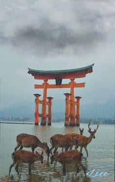 Miyajima es una isla localizada en Japón a 50 km de Hiroshima, declarada patrimonio de la humanidad por la Hunesco, donde los ciervos son sagrados