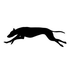 Greyhound Silhouette Clip Art - more info Football Outline, Silhouette Clip Art, Moose Art, Cricut Ideas, Animals, Animales, Animaux, Animal Memes, Animal