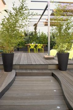Bamboo on roof terrace