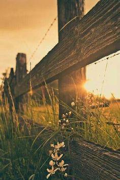 .Lindo por do sol na cerca!