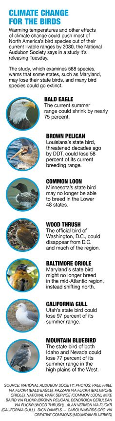 Audubon scientists say the warming planet could put a number of beloved birds in the hot seat, including the bald eagle and the Baltimore oriole, as well as state birds from Louisiana, Utah, Vermont, Nevada, Idaho, Pennsylvania, New Hampshire and Washington, D.C. | Graphic by Michelle Bloom/POLITICO | http://www.politico.com/story/2014/09/climate-change-isnt-for-the-birds-110733.html #climatechange #audubon #birds