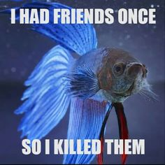 Betta logic - this is sound logic 😉 Betta Aquarium, Koi Betta, Betta Fish Care, Betta Tank, Diy Aquarium, Aquarium Ideas, Animal Memes, Funny Animals, Cute Animals