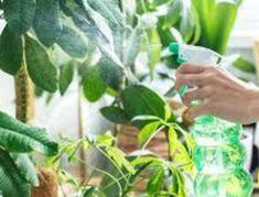 Ρίξτε μαγειρική σόδα στα φυτά σας και εξαφανίστε ασθένειες και έντομα - DECO & ΣΠΙΤΙΑ - Youweekly Fauna, Trees To Plant, Seeds, Cleaning, Tips, Flowers, Gardening, Decoration, Stencil
