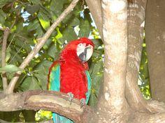Sinop, Mato Grosso Parrot, Bird, Animals, City, Places, Parrot Bird, Animales, Animaux, Birds