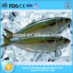 Sea frozen Indian Mackerel Whole Round on Hot Sale