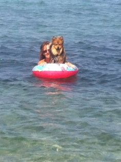 Spitz Pomeranian, Boat, Puppies, Animals, Dinghy, Cubs, Animales, Animaux, Boats