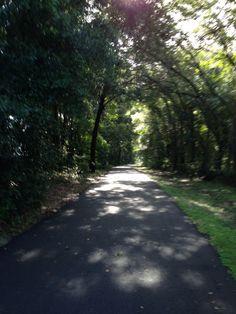 From my run. Trail Running