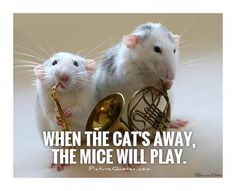 When the cat's away, the mice will play. < So We Just Signed The DIVORCE paper and the ex is out drunkning and celebrating the first weekend when I visit my parents with the kids. I feel sooooooo special. 😰 Cat quotes on PictureQuotes.com.