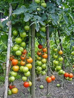 kudy-kam: Omáčka z pečených rajčat Chutney, Homemade, Vegetables, Food, Red Peppers, Vegetable Recipes, Eten, Chutneys, Veggie Food