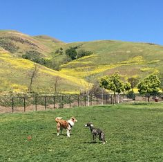 Sunny day at Ed Levin County Dog Park - Milpitas, CA - www.pierceytoyota.com