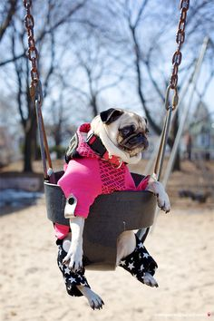 Ms. Pug says: You're never too cool to swing